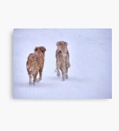 Romancing the snow Canvas Print