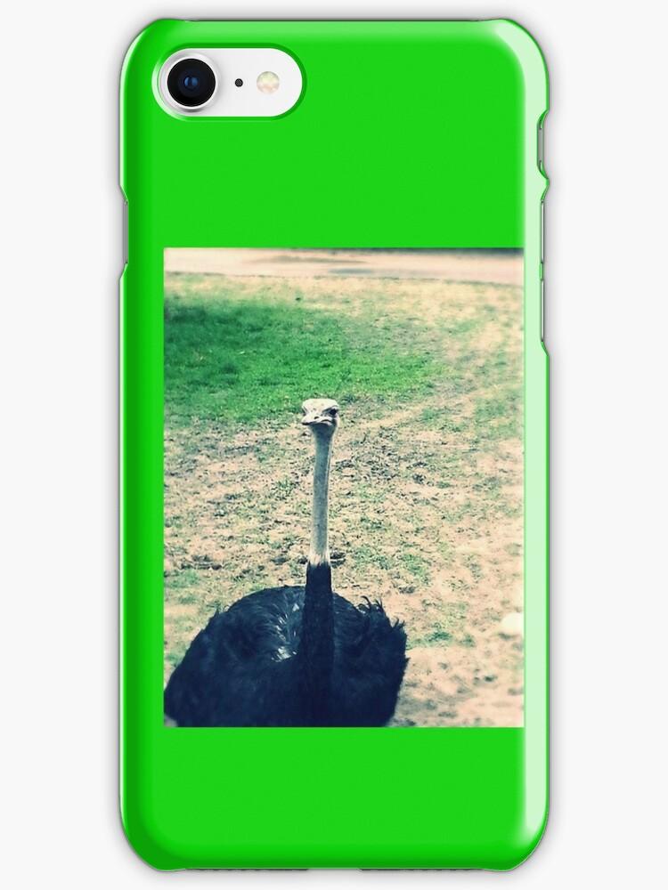Ostrich  by anakinsutcliff