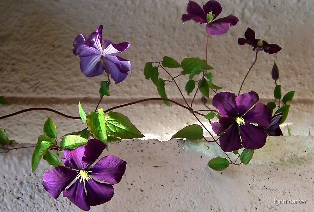 Purple Flowers On The Vine by lynn carter