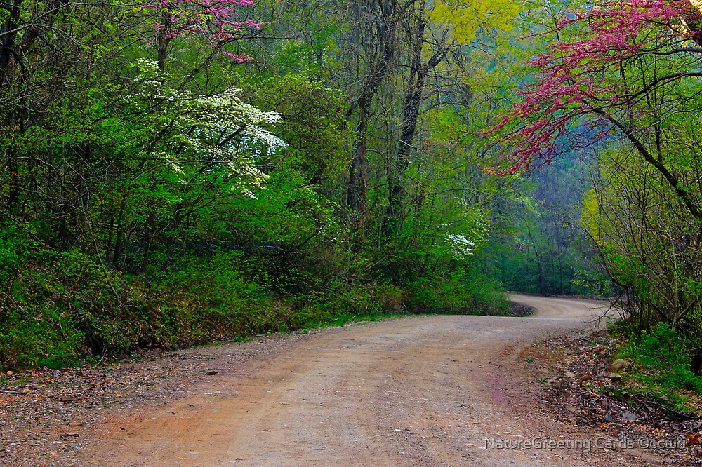 Spring Curves by NatureGreeting Cards ©ccwri