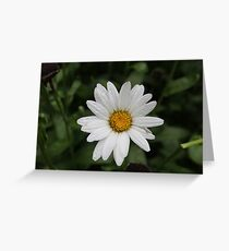Springtime Daisy Greeting Card