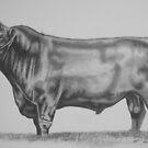 Australian Lowline Bull by Penny Edwardes