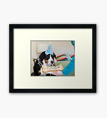 Bernese and the Birthday fun! Framed Print