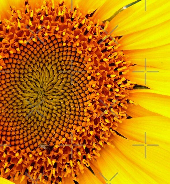 Sunflower by Melanie Froud