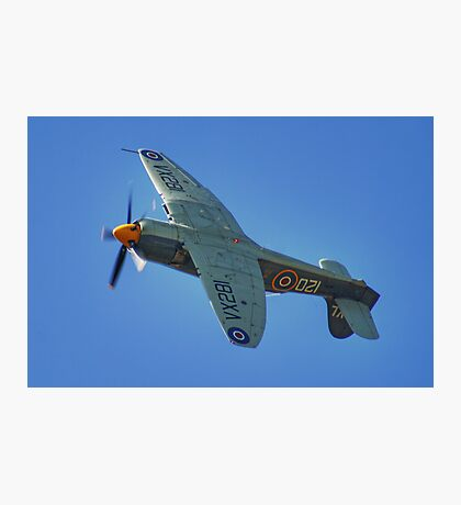Sea Fury - Shoreham - 2013 Photographic Print