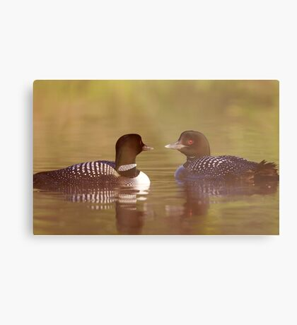 """""""Ahh…a-loon at last"""" - Common Loon Metal Print"""