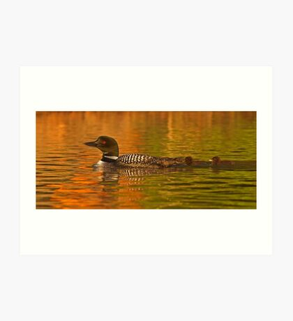 Follow the leader - Common loon Art Print