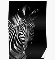 Striped Beauty Poster
