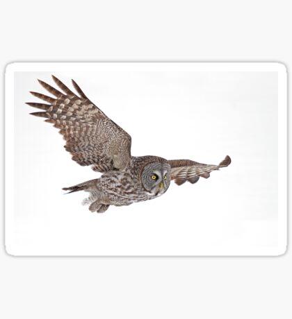 In Flight - Great Grey Owl Sticker
