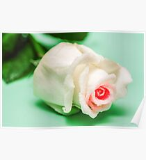Beautiful Frosted White Pink Rose Poster