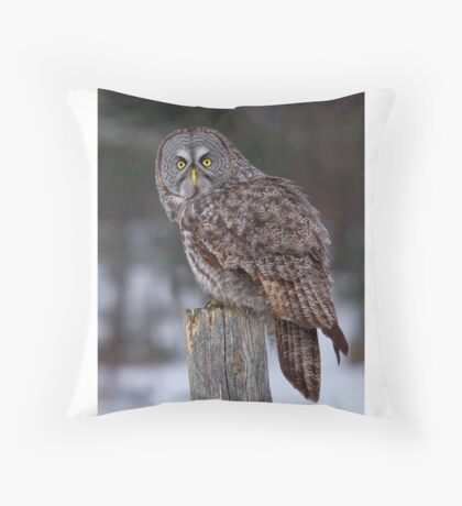 Piss Off! - Great Grey Owl Throw Pillow