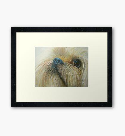 Cheeky chappy Framed Print
