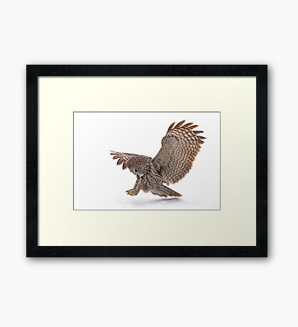 Once a pounce a time - Great Grey Owl Framed Print