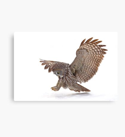 Once a pounce a time - Great Grey Owl Canvas Print