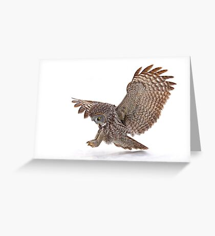 Once a pounce a time - Great Grey Owl Greeting Card