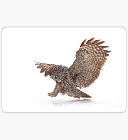 Once a pounce a time - Great Grey Owl Sticker