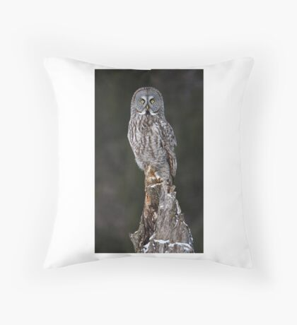 The Phantom - Great Grey Owl Throw Pillow