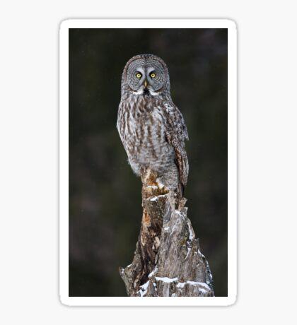 The Phantom - Great Grey Owl Sticker