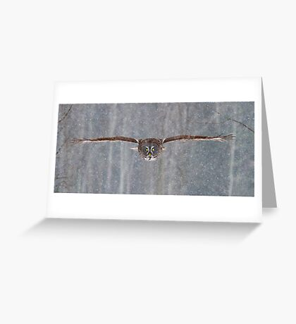 Full speed - Great Grey Owl Greeting Card
