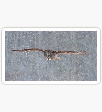 Snowfall - Great Grey Owl Sticker