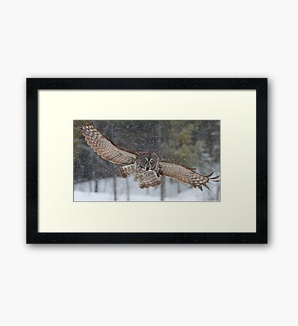 Duck! - Great Grey Owl Framed Print