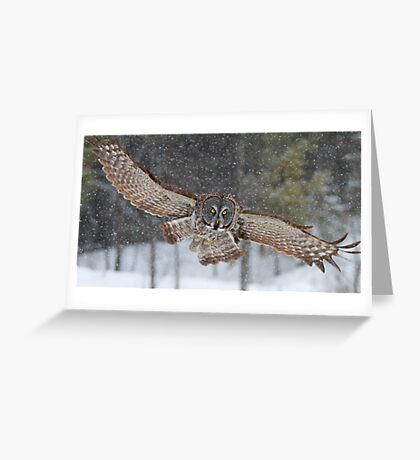 Duck! - Great Grey Owl Greeting Card