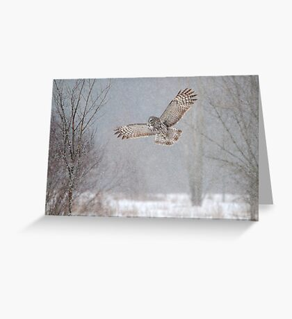 Towards the Heavens - Great Grey Owl Greeting Card