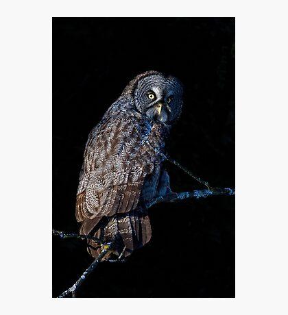 Spotlit - Great Grey Owl Photographic Print
