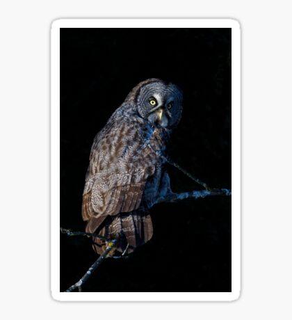 Spotlit - Great Grey Owl Sticker