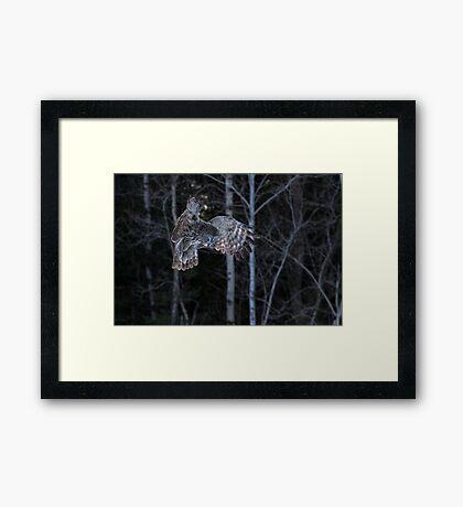 Hover - Great Grey Owl Framed Print