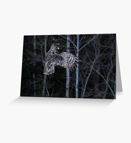 Hover - Great Grey Owl Greeting Card