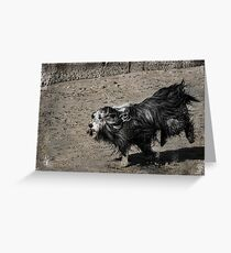 Shaggy Dog Greeting Card