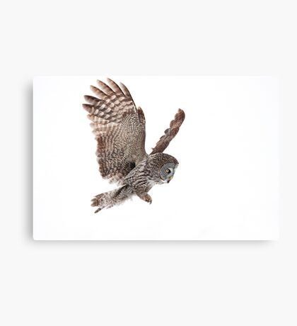Incoming - Great Grey Owl Canvas Print