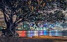 Balmain Tree by yolanda