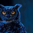 Moonlight Owl von MMPhotographyUK
