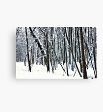 Snow covered trees. Canvas Print