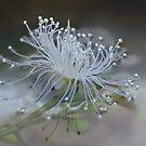 Fallen Water Blossom by Gabrielle  Lees