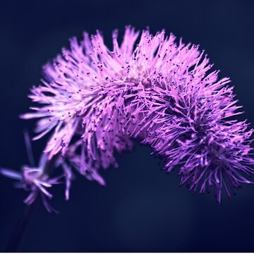 Violet flowers on dark background by skyfish