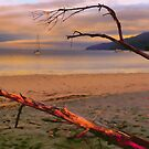 Look out to sea - Adventure Bay, Bruny Island, Tasmania by PC1134