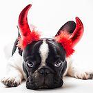 bulldog dressed up as a devil  by Dobromir Dobrinov