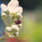 Spotted Ladybug on a Blossom by Tamara Brandy