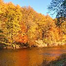 Autumn colours, riverside walk, November 2013 by Hugh McKean