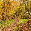 Autumn colours, woodland walk, November 2013 by Hugh McKean