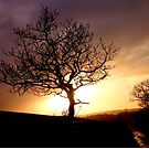 Sunset Tree by mikebov