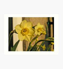 Daffodil Charme Art Print