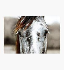 Horse Fotodruck