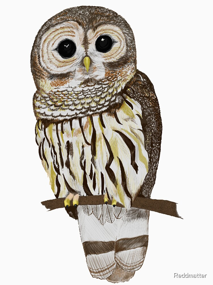 Hand drawn Barn Owl by Reddmatter