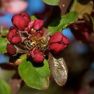 Spring Buds With Honey Bee by K D Graves Photography