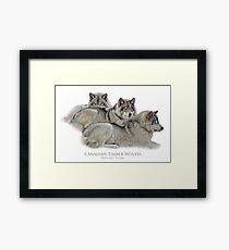 Canadian Timber Wolves Framed Print