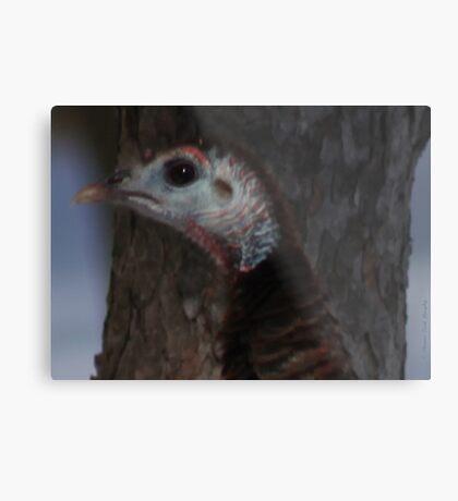 Portrait of a Wisconsin Wild Turkey Metal Print